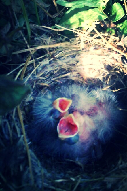 birds_kindlephoto-28280839
