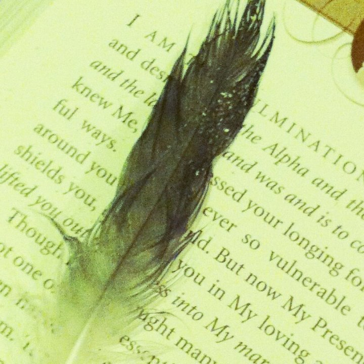 Found feather