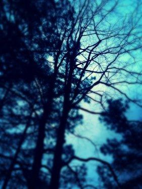 IMG_1195_kindlephoto-4925811