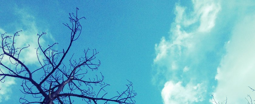 IMG_1203_kindlephoto-5966874