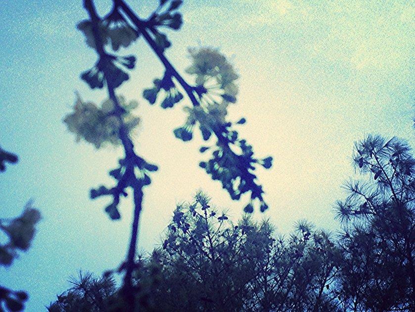 IMG_1667_kindlephoto-1055205