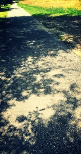 IMG_0046-2_kindlephoto-2759334